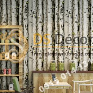 Giấy dán tường giả rừng gỗ bạch dương trắng 3D223