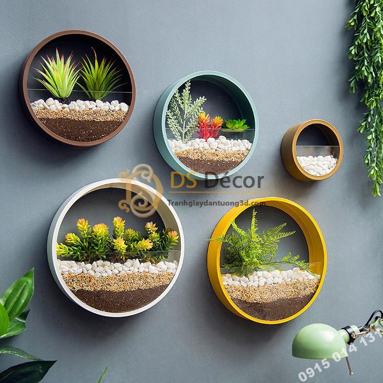 Vòng tròn trồng hoa treo tường trang trí của hàng DC03