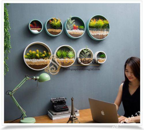 Vòng tròn trồng hoa treo tường trang trí nơi làm việc DC03