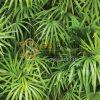 Bề mặt Giấy dán tường Hàn Quốc Natural lá cây tropical 88425-1 tropical